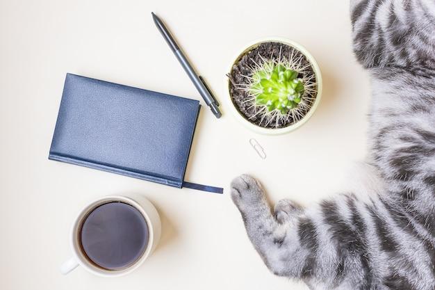 Op een lichte tafel liggen een kopje koffie, een schrift, een pen, een cactus en een grijs-zwarte kat. bovenaanzicht, platliggend. concept huisdier op het werk.