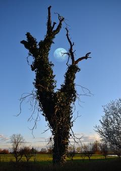 Op een perfecte lentedag geeft de maan een dromerige sfeer