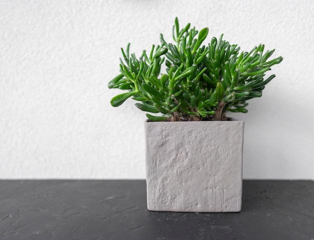 Op een zwarte tafel staat een groene vetplant in een moderne grijze pot