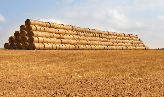 Op elkaar gestapeld in een enorme stapel cilindrische rollen stro voor opslag tijdens de winter, het zomerlandschap
