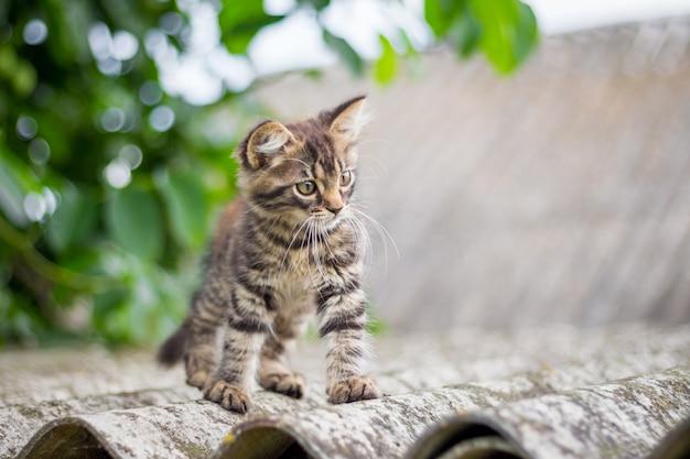 Op het dak van het huis zit een klein gestreept katje