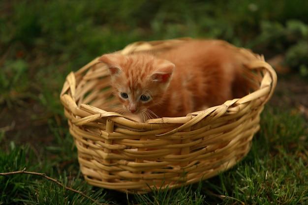 Op het gras staat een rieten mand en daarin zit een klein knalrood kitten.