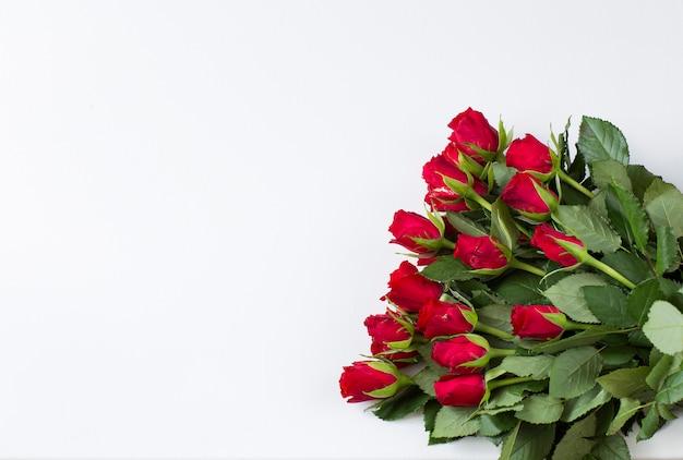 Op witte achtergrond rode rozen - feestelijke achtergrond