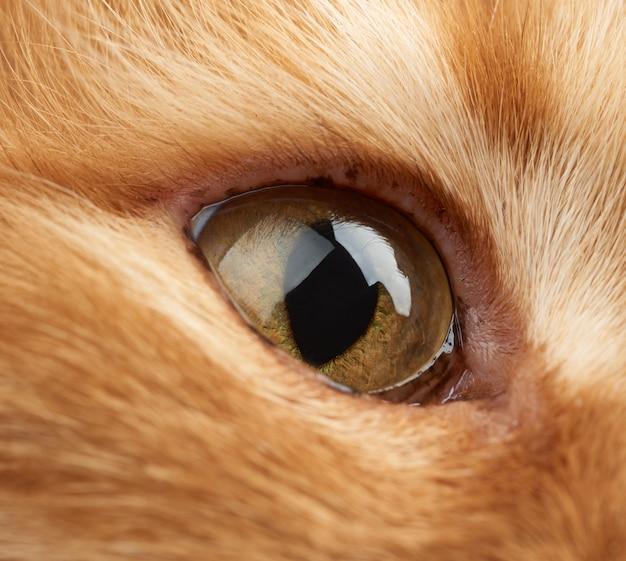 Open geel oog van een rode kat
