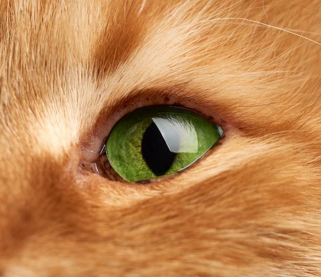 Open groen oog van een rode kat, macro