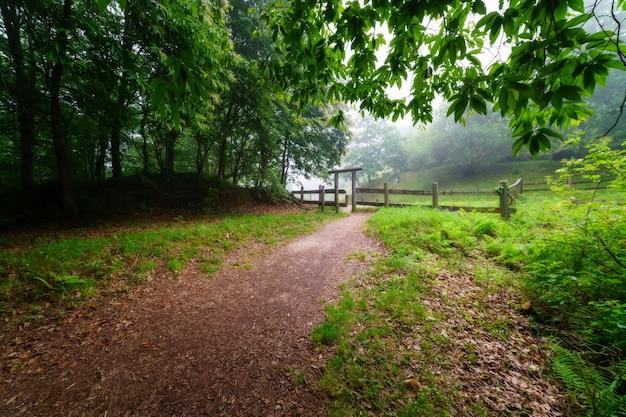 Open plek in het donkere bos op een intense mistige dag en houten hek