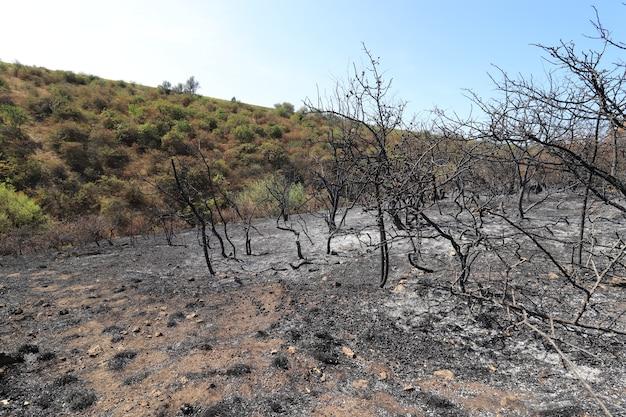 Open plek met verbrande bomen en gras zwarte verschroeide weide