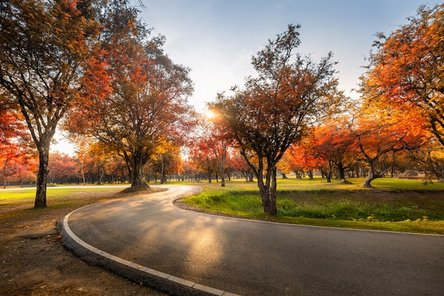 Openbaar park buiten en tuinbomen in herfstseizoen