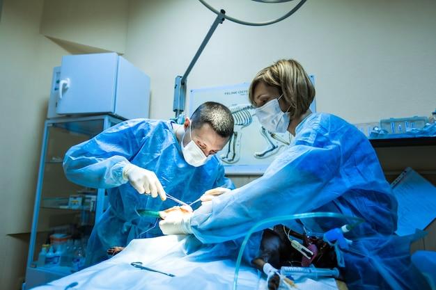 Operatie aan de poot van de hond in de veterinaire kliniek. de dokter naait de poot van de hond dicht.