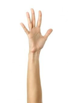 Opgeheven hand stemmen of bereiken. vrouwenhand gesturing geïsoleerd op wit