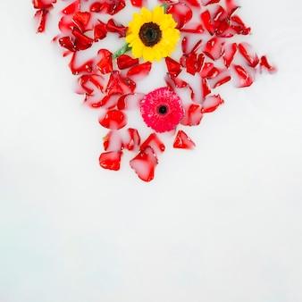 Opgeheven mening van gele en rode bloemen met bloemblaadjes die op water drijven