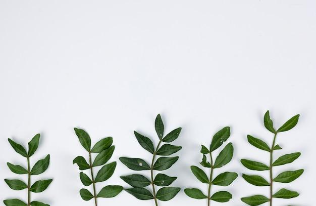 Opgeheven mening van groene die bladeren op witte achtergrond worden geïsoleerd