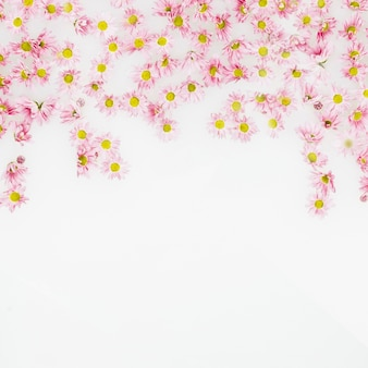 Opgeheven mening van mooie roze bloemen op witte achtergrond