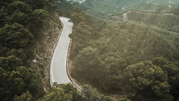 Opgeheven mening van weg en bos tijdens zonnige dag