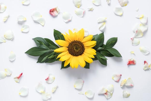 Opgeheven mening van zonnebloem die met witte bloemblaadjes wordt omringd