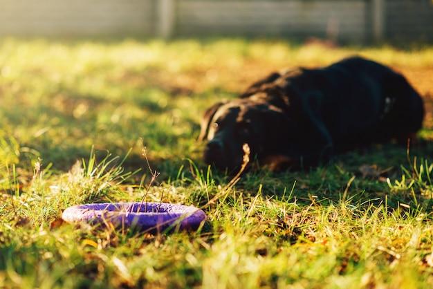 Opgeleide waakhond achter een stuk speelgoed op speelplaats