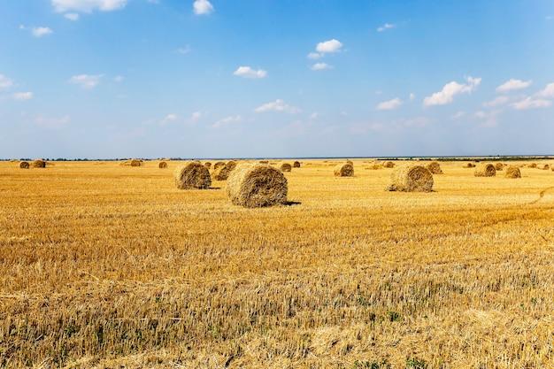 Opgestapeld in de landbouw veld hooibergen stro. granen. zomer