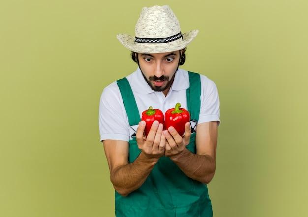 Opgewonden mannelijke tuinman tuinieren hoed dragen houdt en kijkt naar rode paprika's
