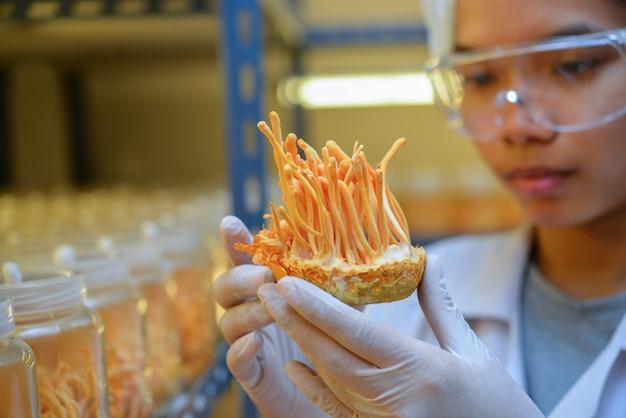 Ophiocordyceps sinensis, cordyceps militaris in glazen flessen in de controlekamer voor licht en temperatuur. chinees medicijn.
