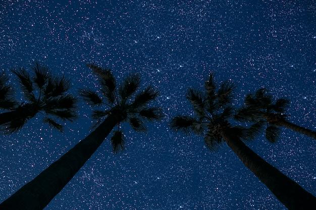 Oppervlakten nachtelijke hemel in zee met palm en sterren en maan en wolken.