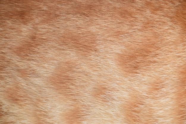 Orange fur cat no.1