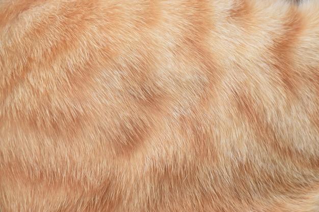 Orange fur cat no.2
