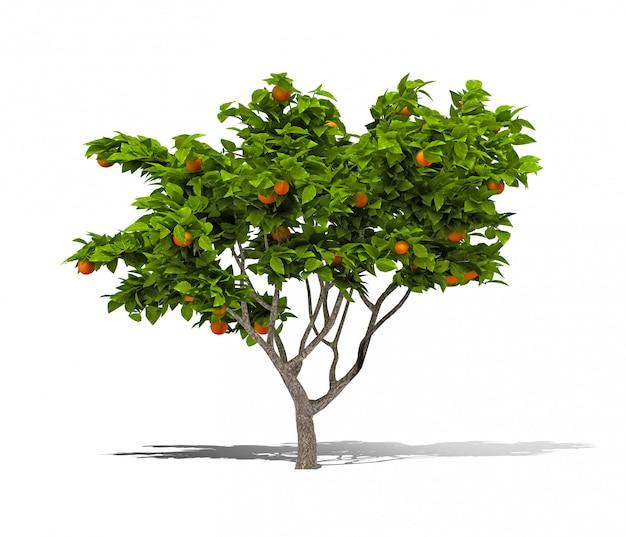 Orange tree 3d-rendering