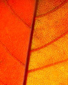 Oranje bladzenuwen van de close-up