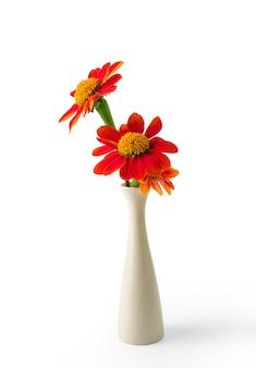 Oranje bloem in vaas die met het knippen van weg wordt geïsoleerd