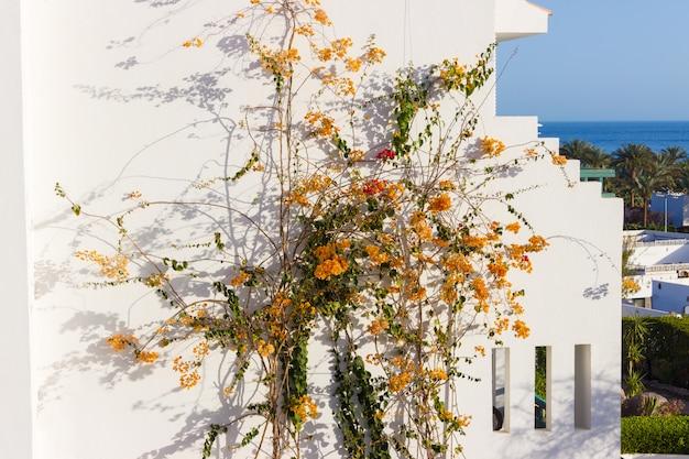 Oranje bloemen op de muur van het huis