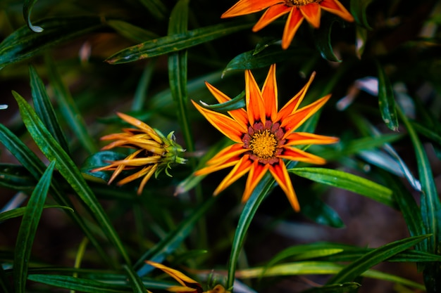 Oranje bloemen op de rand van bladeren met groene planten