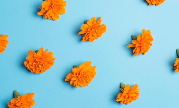 Oranje bloemen op een blauwe ondergrond