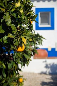 Oranje boom voor wit huis