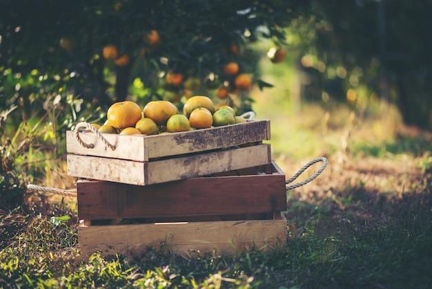 Oranje doos op houten tafel