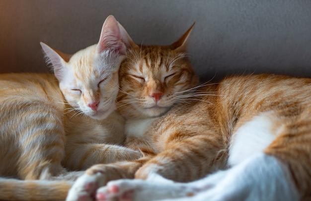 Oranje en wit thais katje, 8 maanden oud, slapend in huis.