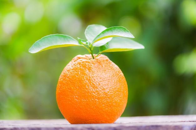 Oranje fruit op aard groen op de zomer