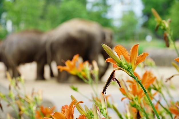 Oranje gekleurde bloemen