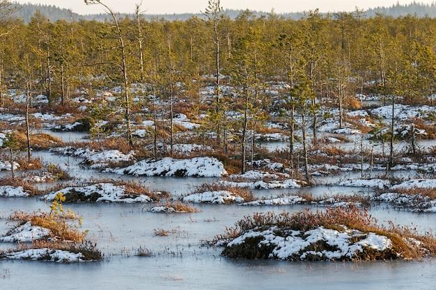 Oranje gras op een moeras in de winter