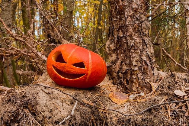 Oranje halloween-pompoen in het herfstbos op een oude stronk en een stapel naaldenkerstbomen