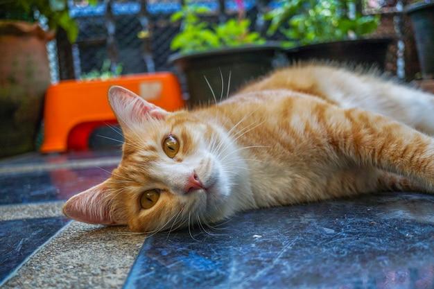 Oranje kat die op de grond ligt en op deze manier kijkt, ziet er schattig uit