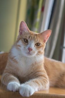 Oranje kat ziet er erg blij uit.