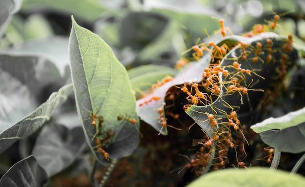 Oranje mieren