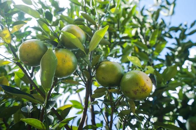 Oranje plantage tuin