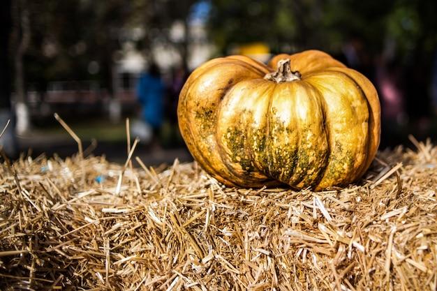 Oranje pompoen in het hooi. herfst. oogst.
