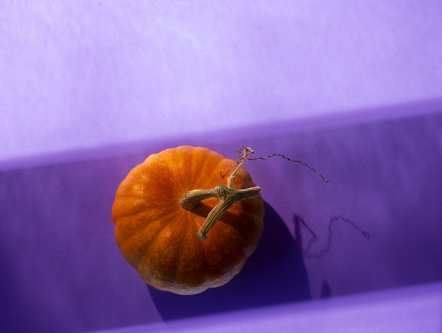 Oranje pompoen op paars, bovenaanzicht