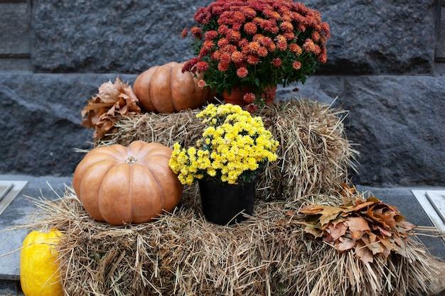Oranje pompoenen en chrysanten op de strobalen voor halloween