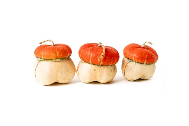 Oranje pompoenen. herfst herfst concept.