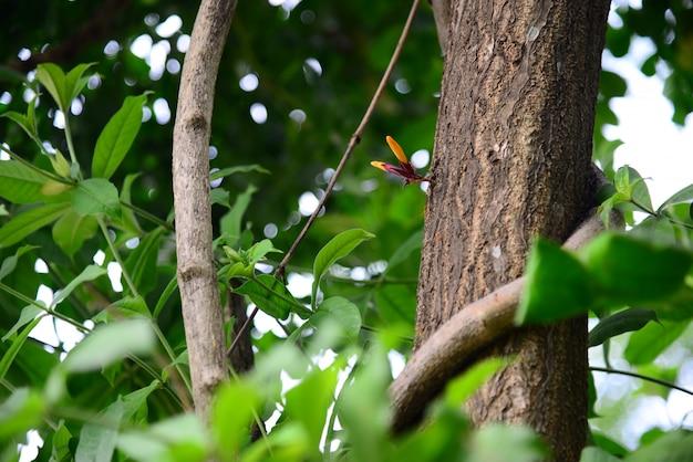 Oranje radermachera-igneabloemen