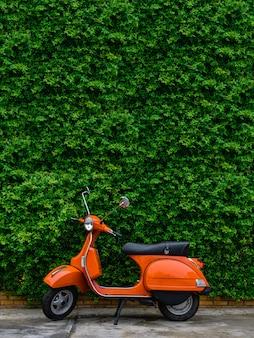 Oranje retro scooter geparkeerd aan straatkant met groene bladeren muur.