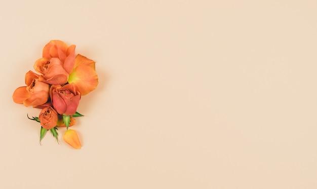Oranje roze hoofden op een roze achtergrond. kopieer ruimte. lente concept.